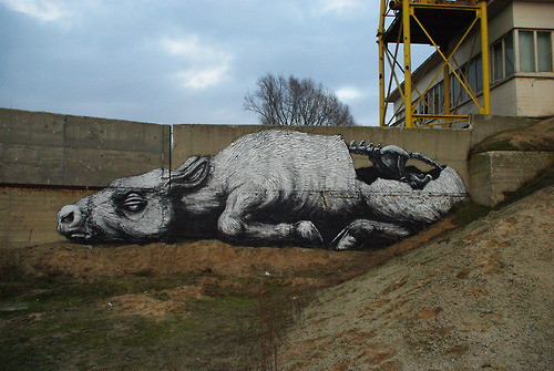 roa-street-art-graffiti